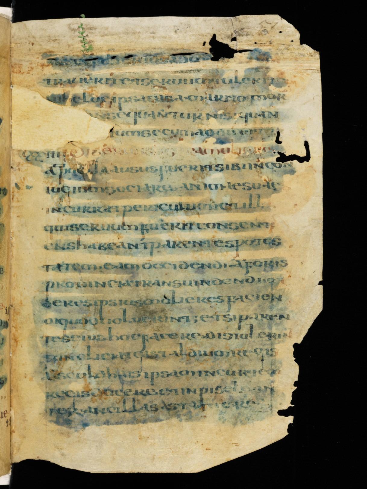 Cod. Sang. 730, p. 51